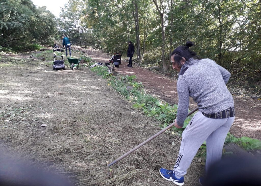 Volunteer clearing grass